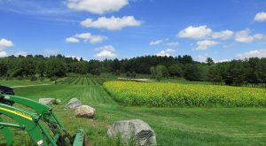 These 12 Charming Farms In Rhode Island Will Make You Love The Country