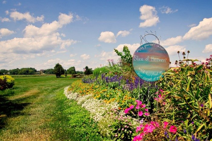 6. New York: Scheuermann Farm in Warwick boasts a large selection of flowers, sweet corn and pink pumpkins.