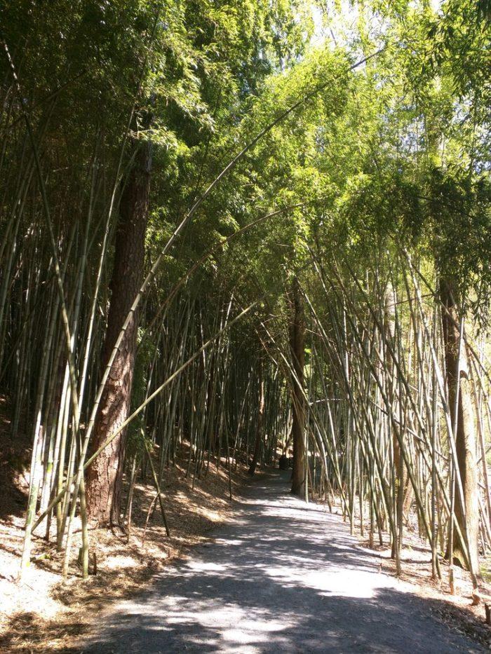 8. Bamboo Forest in Wilderness Park - Prattville, AL