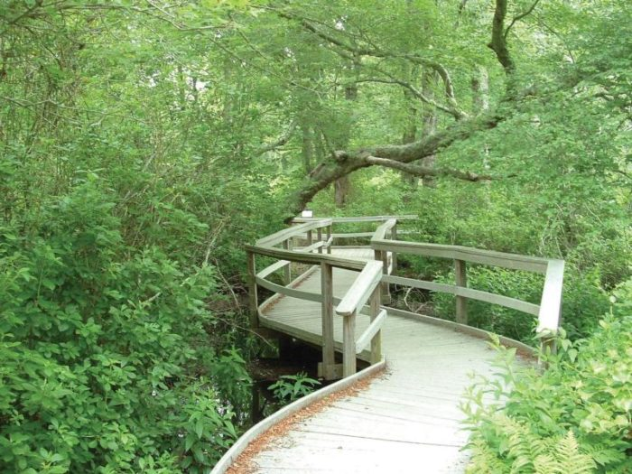 3. Red Maple Swamp Trail, Eastham
