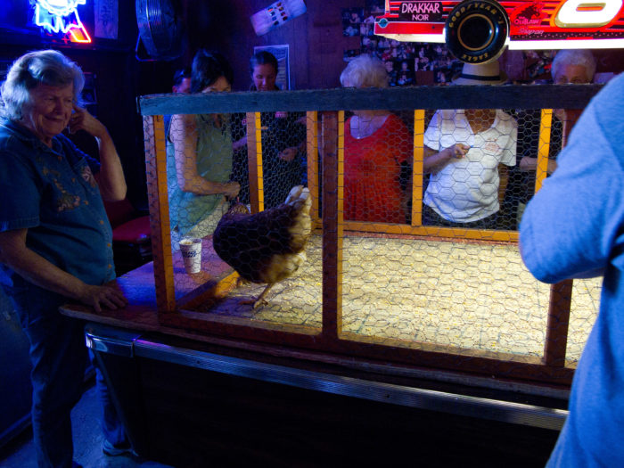 9. Play bingo with a chicken .