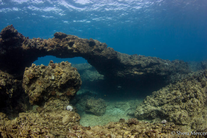 7. Coral Reefs