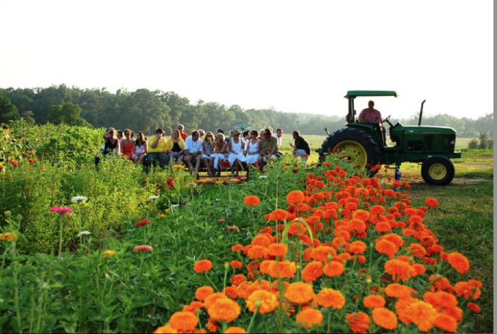 15. Louisiana: Covey Rise Farms near Husser specializes in growing and foraging vegetables and fruits. They offer tractor rides through the beautiful countryside.
