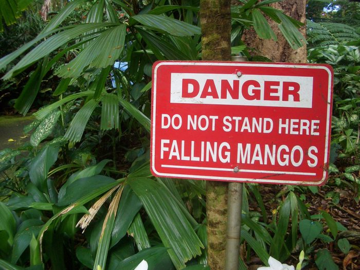 4. Don't forget about the danger of falling mangos, too!
