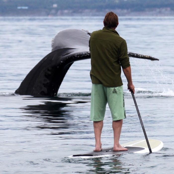 1. Whale watching via paddleboard at Stillpoint Lodge in Halibut Cove.