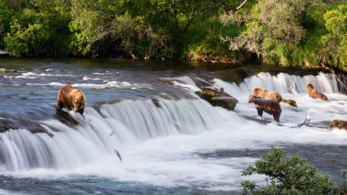5. Watch bears feed on salmon jumping out of waterfalls in Katmai National Park.