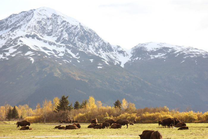 2. Alaska Wildlife Conservation Center