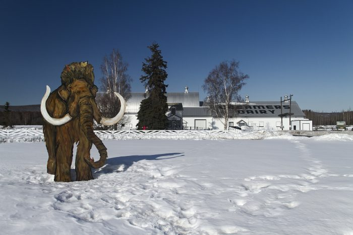 15. Are there still mammoths around up here?