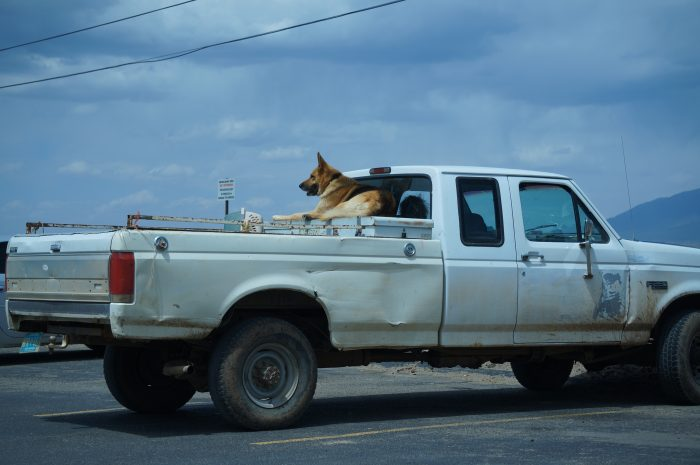 5. In Anchorage it is illegal to let your dog ride freely in the back of your truck.