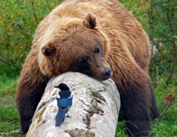 2. Although it is legal to shoot bears (hunting rules and restrictions apply), waking a sleeping bear for the purpose of taking a photograph is prohibited.