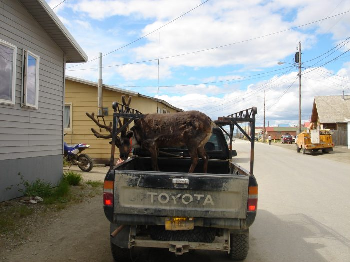 11. Oh look a reindeer in the back of the truck. We must be in the bush!