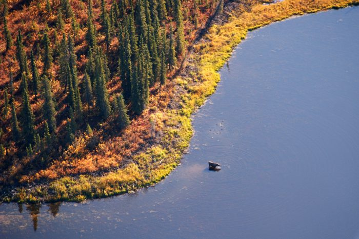9. It is illegal to view moose from a flying airplane in Alaska.
