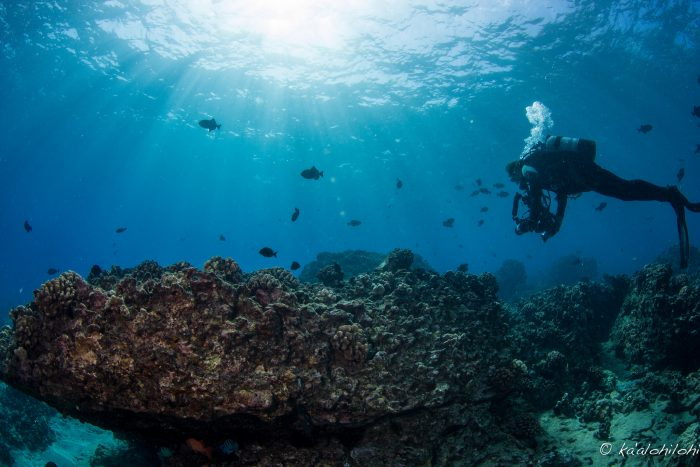 An estimated 400 species of fish live in the gentle waters of this picturesque bay, and luckily, renting snorkeling or diving equipment is easy if you choose not to bring your own.