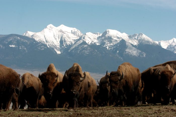 3. National Bison Range Scenic Byway