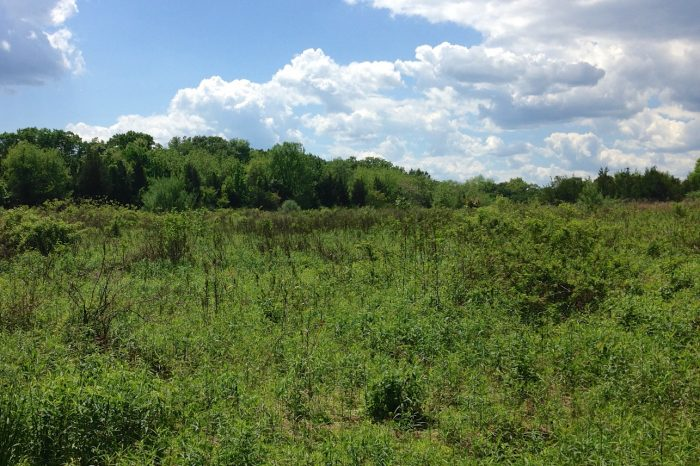 1. Hutcheson Memorial Forest, Franklin Township