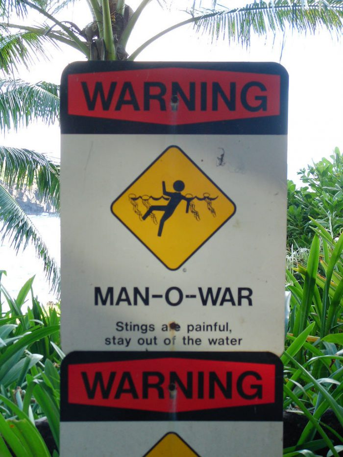 9. In Hawaii, this is apparently what a jellyfish attack looks like.