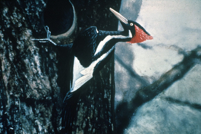 16.A species once thought long extinct was rediscovered there.