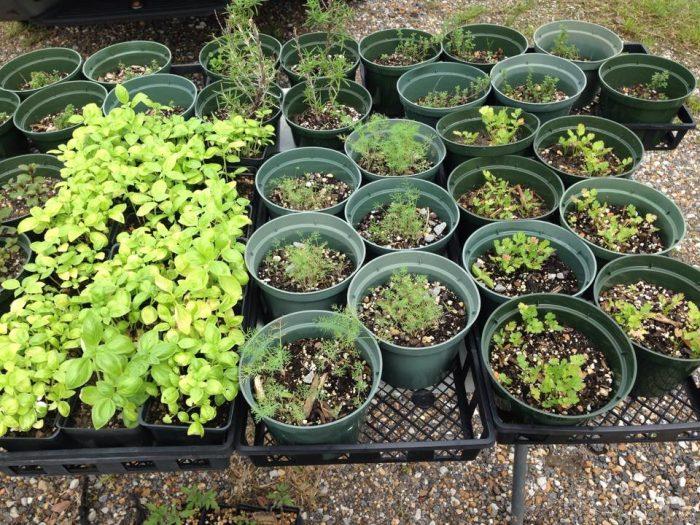 8. Louisiana Herbs LLC, Columbia, LA