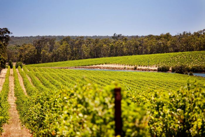 5. Lake Michigan Shore Wine Trail
