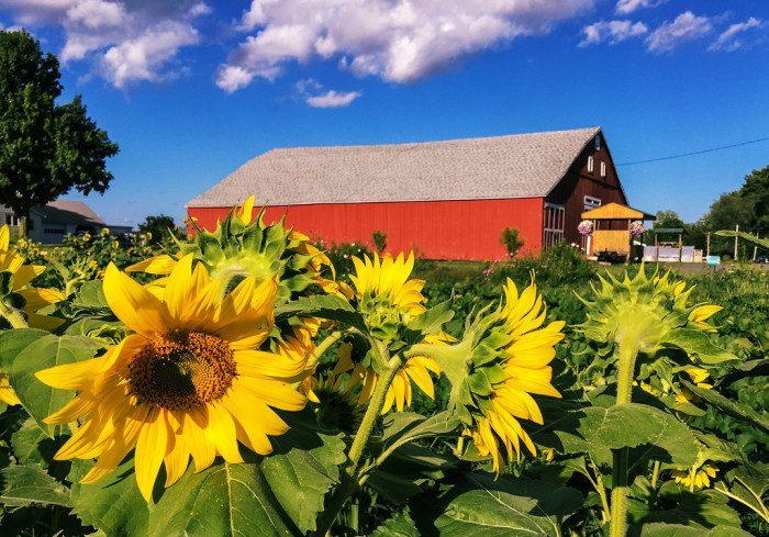 1. Massachusetts: Hadley