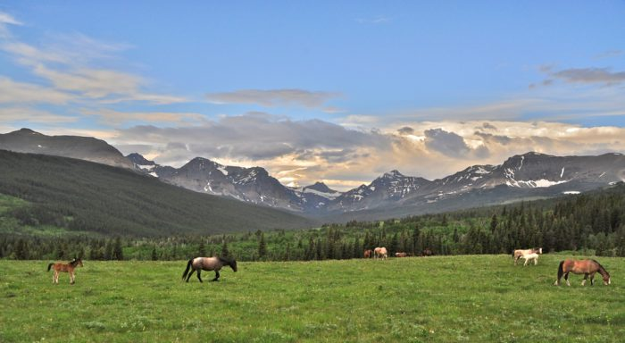 6. Horses.