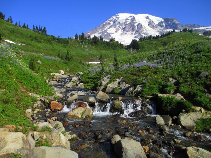 8. Mount Rainier Park Tours