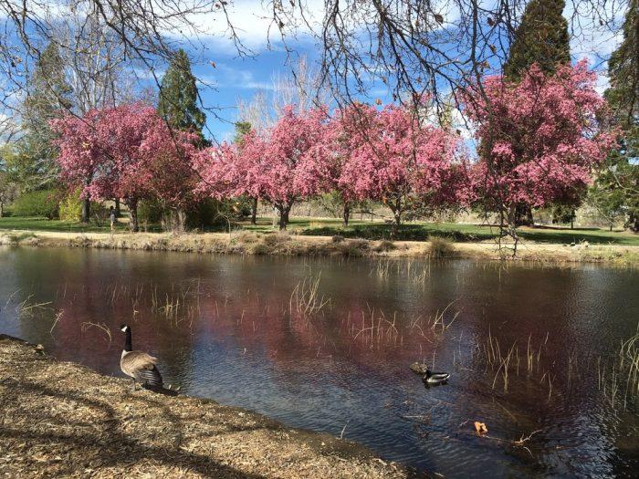 3. Idlewild Park - Reno