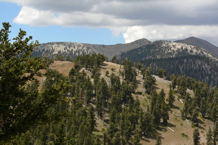 8. Nevada is home to more mountain ranges and...