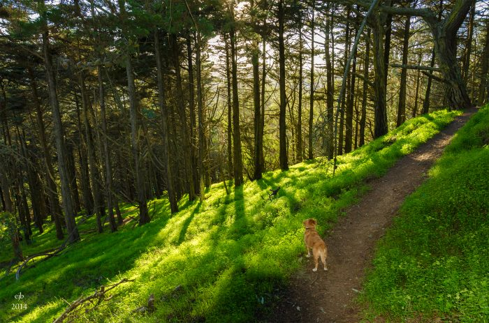 2. With 7 miles of walking trails, it's perfect for an urban hike (or dog walk!).
