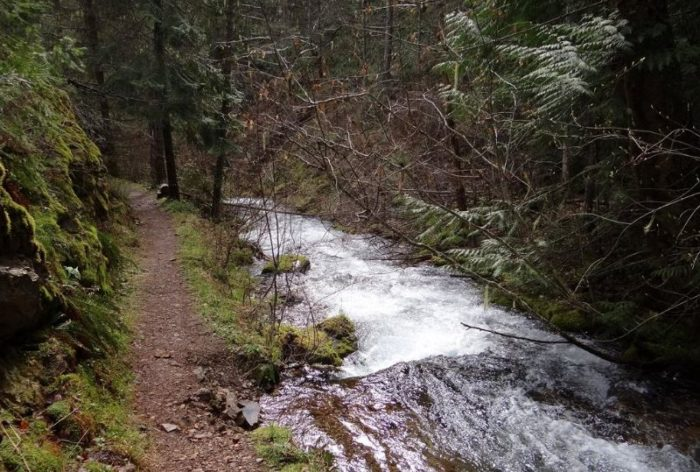 The trail is a cool, easy hike in the middle of a forested canopy, right alongside Placer Creek.