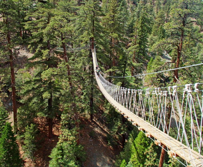 There are 3 sky bridges to experience on the canopy walk. This one...