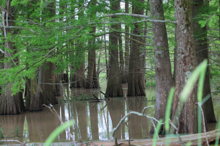 Taking a tour with Grosse Savanne does not mean you will be experiencing only Louisiana marshlands.