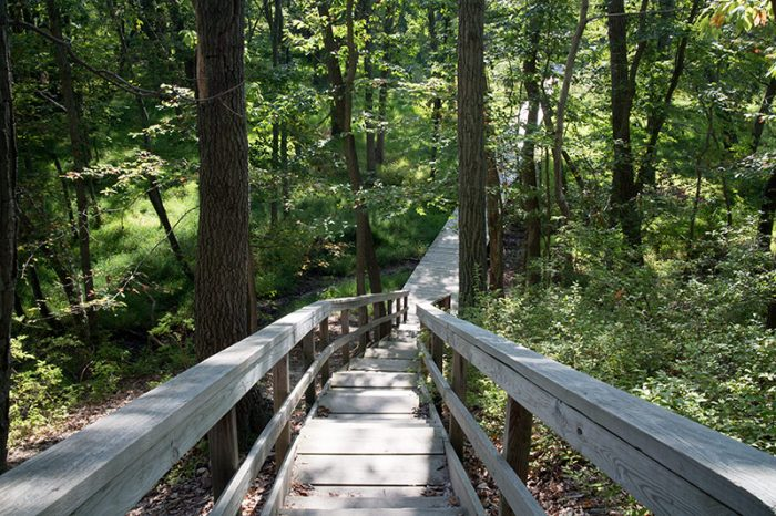 Hiking Cheesequake State Park In New Jersey