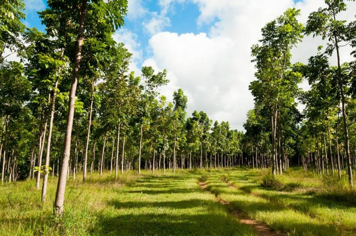The trail is accessible through the Anaina Hou Community Park, and will lead you on a journey through the the Wai Koa Plantation, a working farm on 500 private acres, as well as the largest mahogany forest in North America.