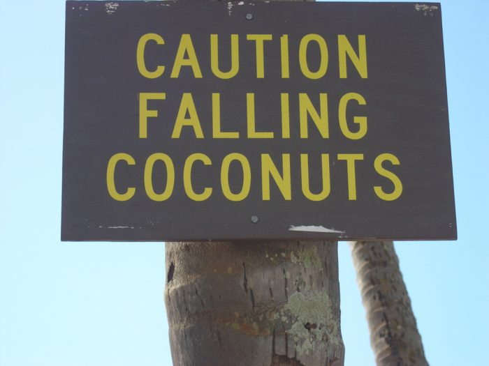 3. Watch out, those pesky falling coconuts may kill you.