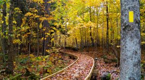This One Easy Hike In Wisconsin Will Lead You Someplace Unforgettable