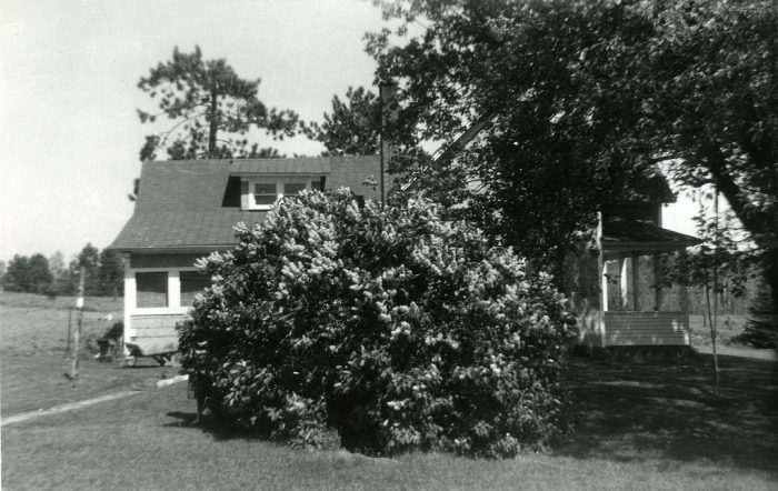 8. A lilac bush obscures a house in Edgewater in 1960.