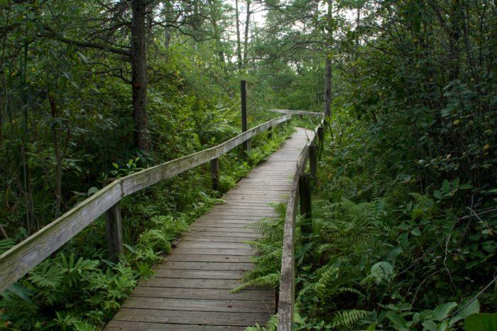5. Volo Bog State Natural Area (Grant)