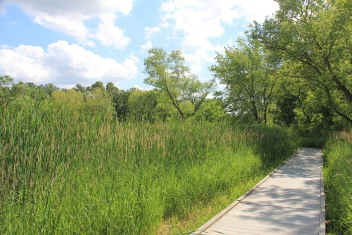 6. Lincoln Marsh (Wheaton)