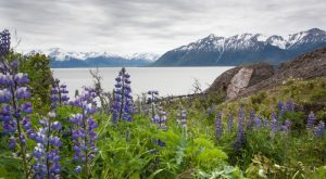 These 16 Beautiful Byways In Alaska Are Perfect For A Scenic Drive