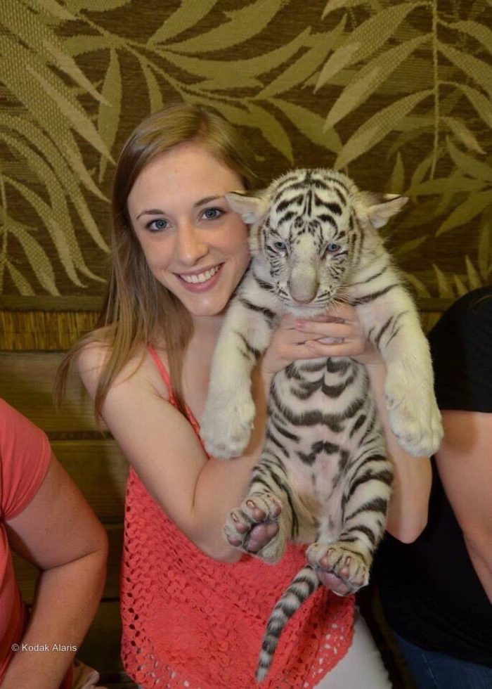 5. Hold and play with a baby tiger.