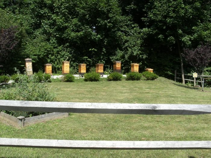 There's plenty of wildlife to be seen at this park. Keep your eyes open for the Honeybee hives!