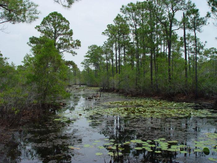 5) Bon Secour National Wildlife Refuge, Gulf Shores, AL