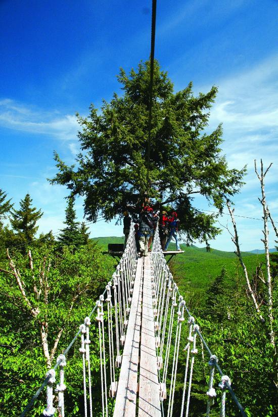 bretton-woods-canopy