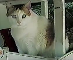 3. Jake Perry, an Austin resident, holds records for the two longest living cats in history. This is Creme Puff, who lived to be 38 years old.