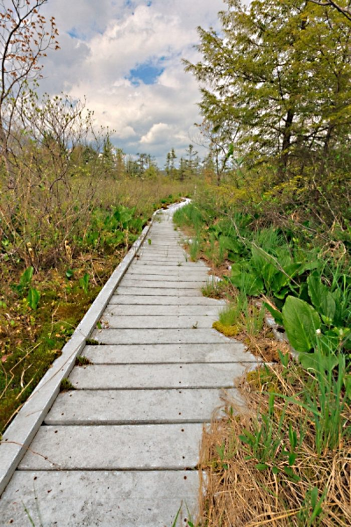 7. Cranesville Swamp Preserve, Preston County
