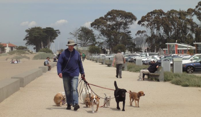 2. A dog walker can only walk up to eight dogs at one time.