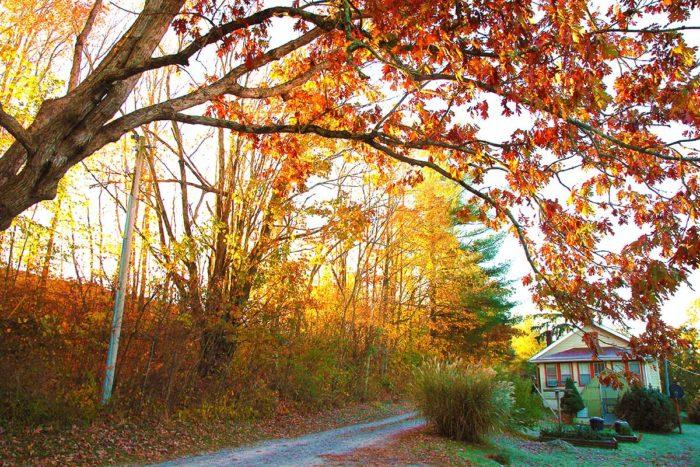 Beautiful trees shade the edges of the farm.