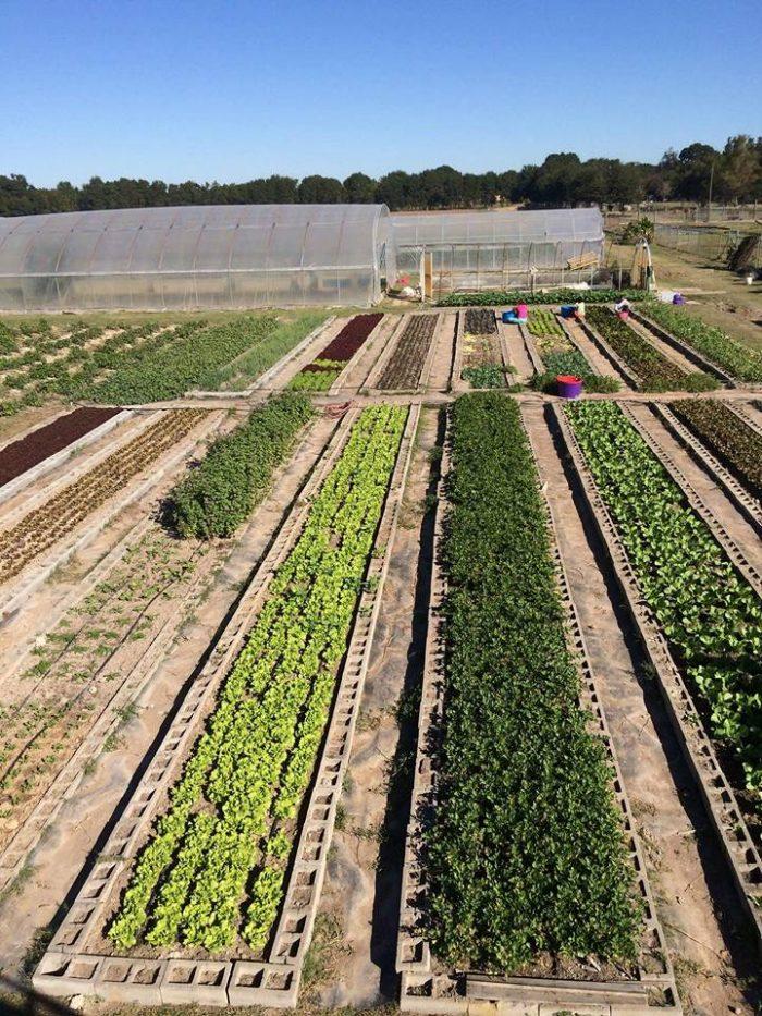 13. Gotreaux Family Farms, Scott, LA