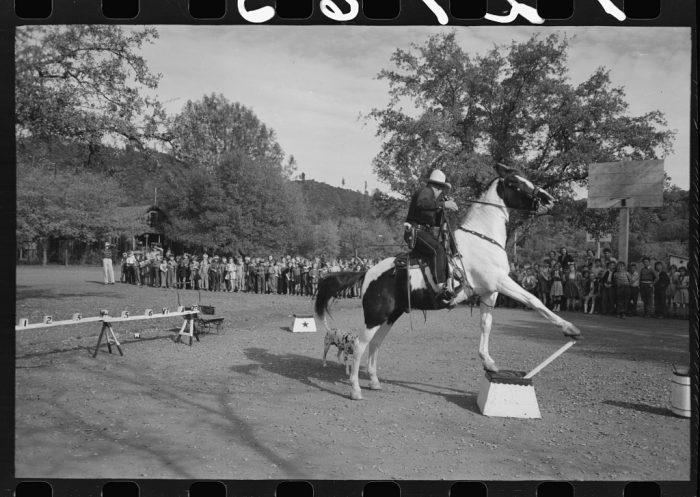 7. They enjoyed horses.